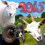 символ 2015 года