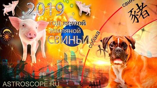 Собака гороскоп на 2019 год Свиньи