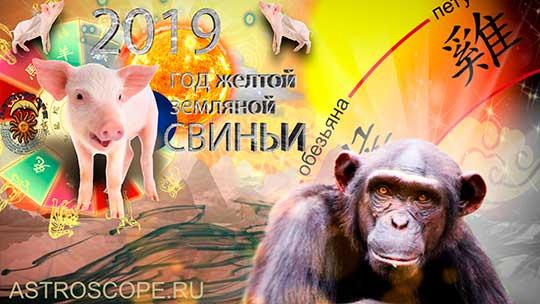 Обезьяна гороскоп на 2019 год Свиньи
