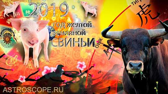 Бык гороскоп на 2019 год Свиньи