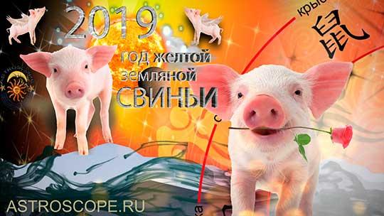 Свинья гороскоп на 2019 год Свиньи