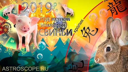 Кролик гороскоп на 2019 год Свиньи