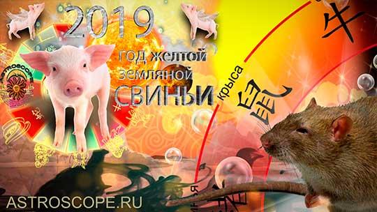 Крыса гороскоп на 2019 год Свиньи
