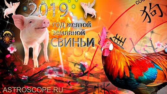 Петух гороскоп на 2019 год Свиньи