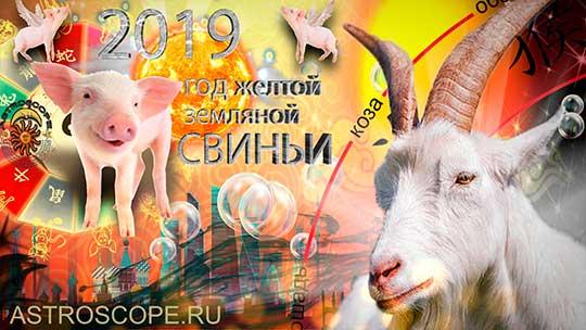 Коза гороскоп на 2019 год Свиньи