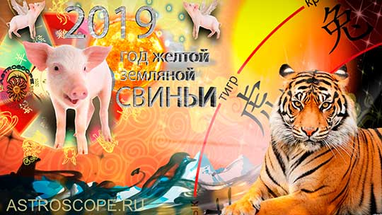 Тигр гороскоп на 2019 год Свиньи