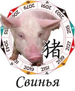 Гороскоп совместимости Свиньи с другими знаками