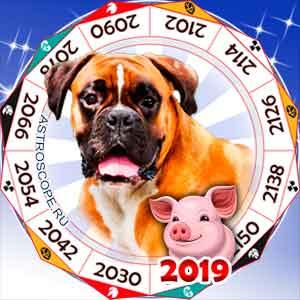 гороскоп для Собаки в 2019 год Свиньи