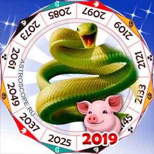 гороскоп для Змеи в 2019 год Свиньи