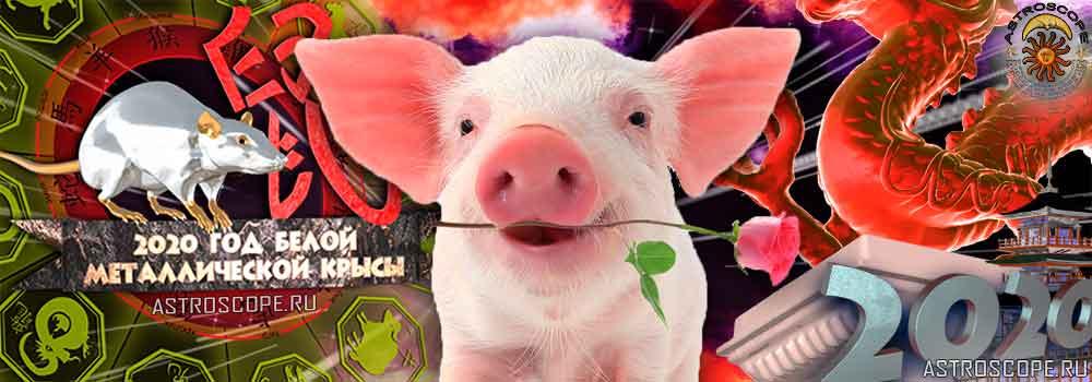Свинья гороскоп на 2020 год Крысы