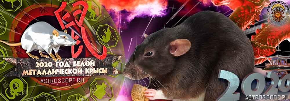 Крыса гороскоп на 2020 год Крысы