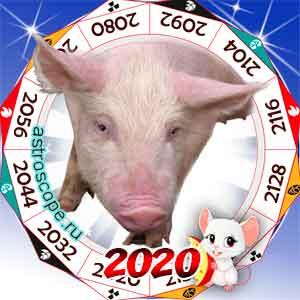 гороскоп для Свиньи в 2020 год Крысы