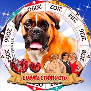 Гороскоп совместимости Собаки с другими знаками
