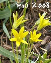 гороскоп месяц май 2008 года